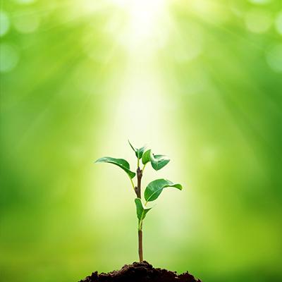 organic fertilizer inico